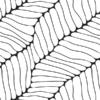 patroon natuur