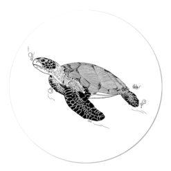 Muurcirkel schildpad