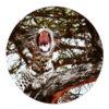 Wandcirkel Luipaard