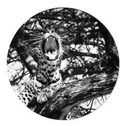 Muurcirkel zwart wit luipaard