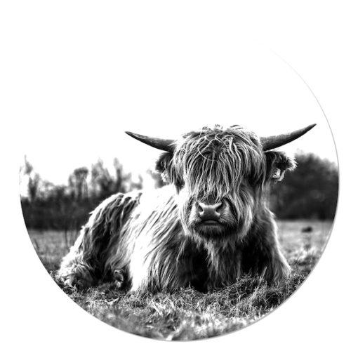 Muurcirkel Schotse Hooglander Liggend in het Gras