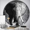 XXL Muurcirkel olifant