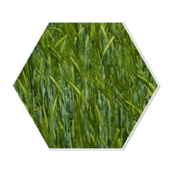 Hexagon Gras