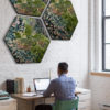 Hexagon Mos