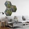 Hexagon Mos natuur