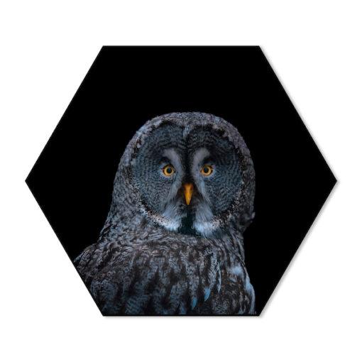 Hexagon Uil