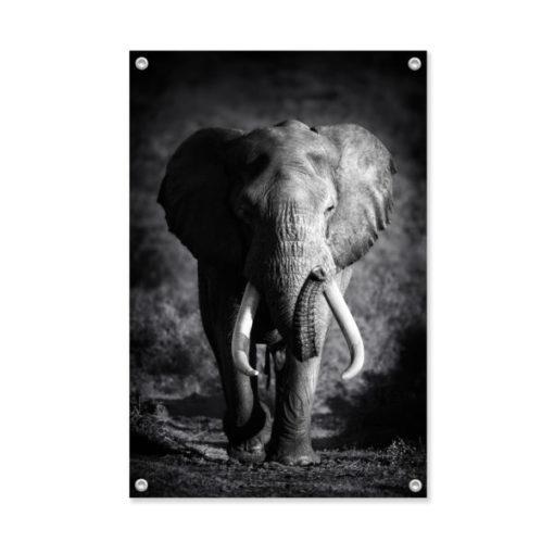 Tuinposter dieren olifant