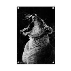 Tuinposter Lion Leeuw