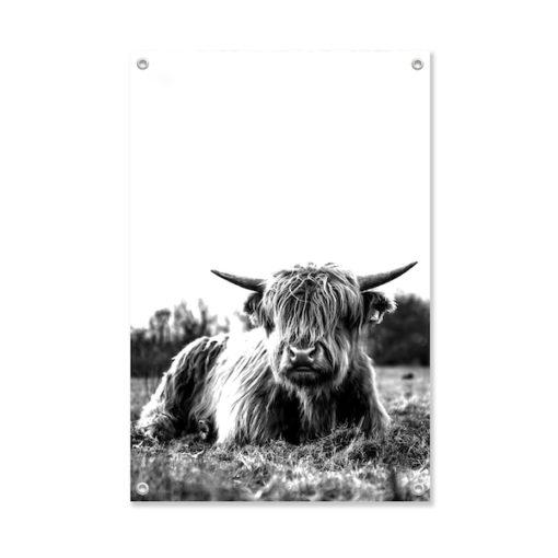 Tuinposter Schotse Hooglander Liggend in het Gras