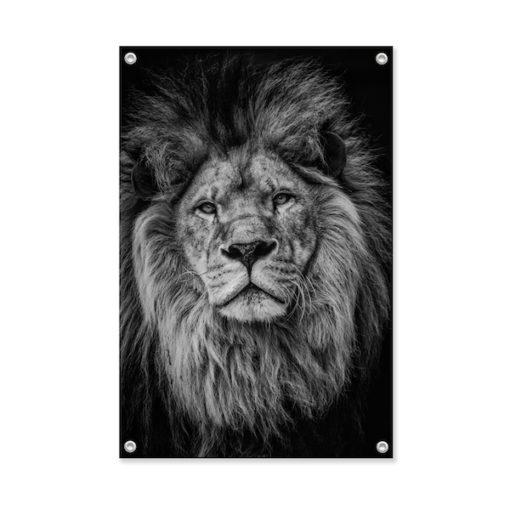 Tuinposter Leeuw