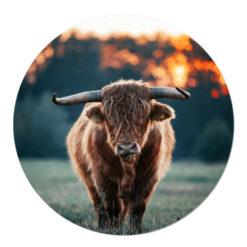 Muurcirkel Schotse Hooglander koe