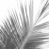 fotobehang palm zwart