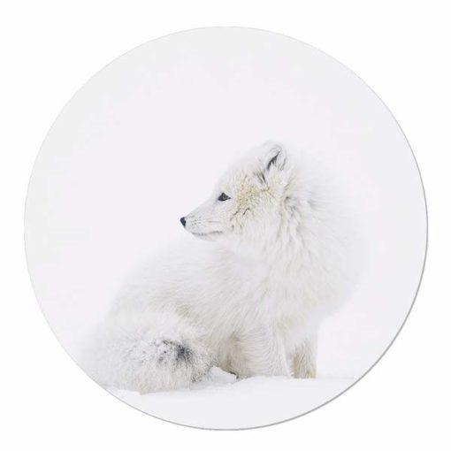 muurcirkel poolvos in de sneeuw